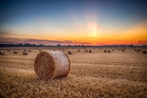 Hay bales in field with sunset