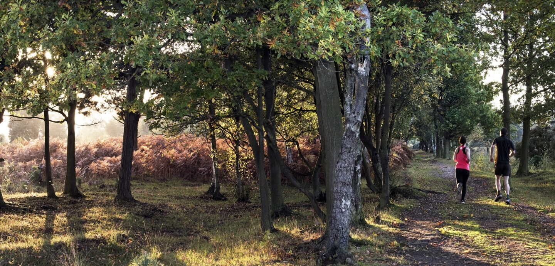 Landscape image of Skipwith Common