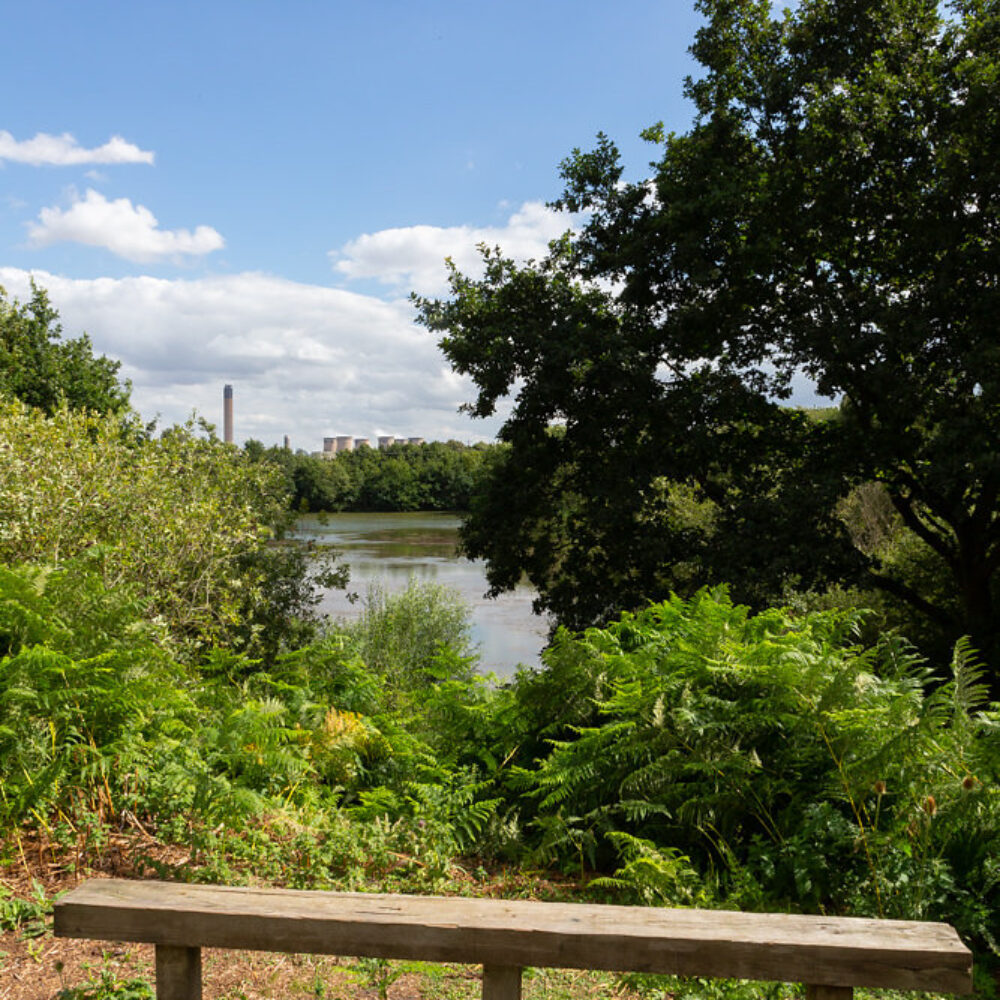 bench and pond at Barlow Common
