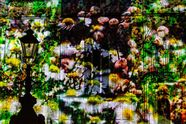 An image of wild flowers projected on to Selby Abbey