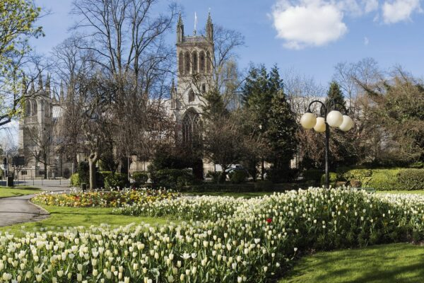 Tulips, trees and Selby Abbey