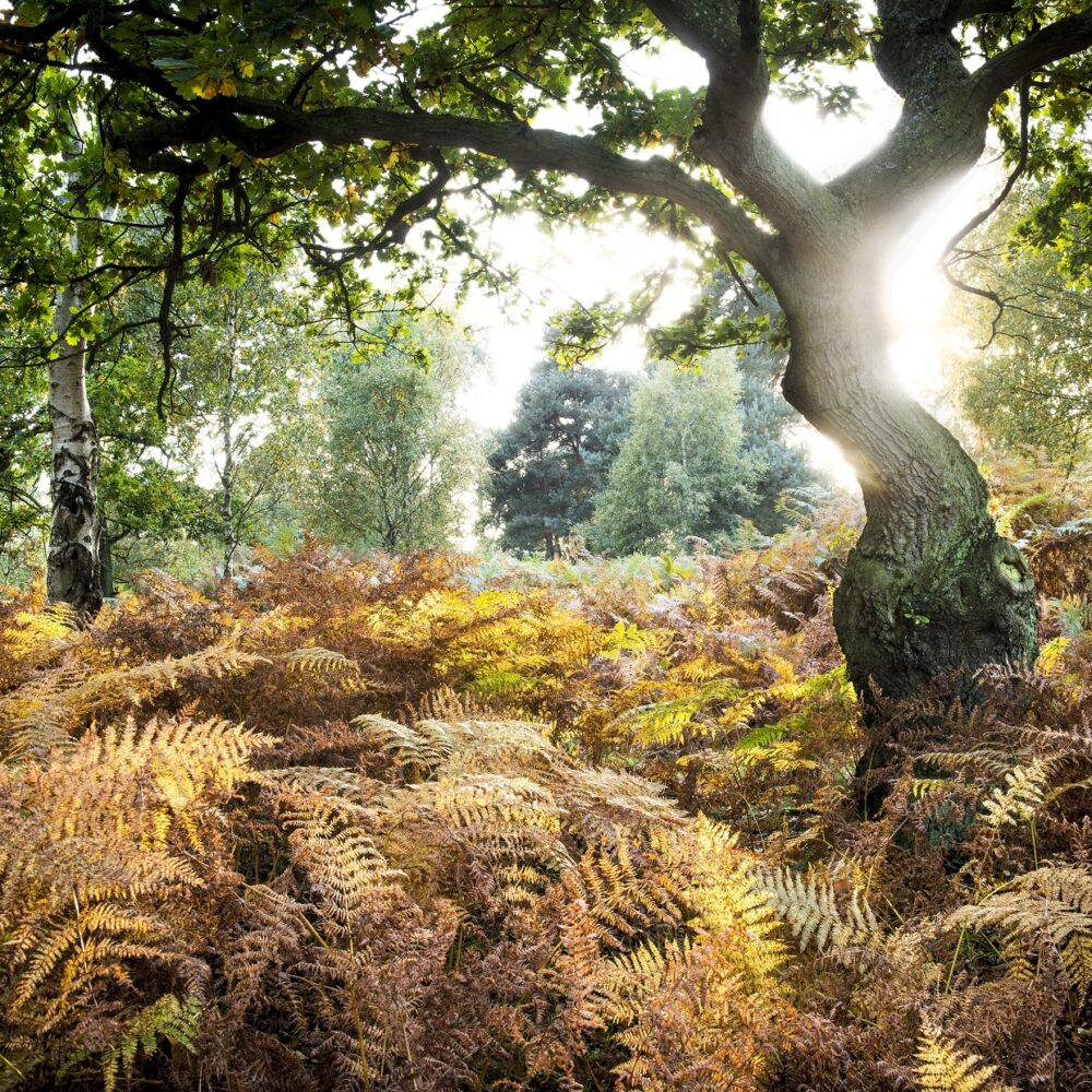 Heathland and trees at Skipwith Common