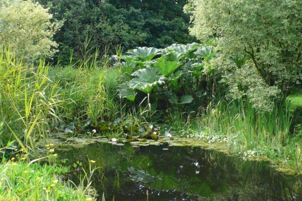 Stillingfleet Lodge Pond