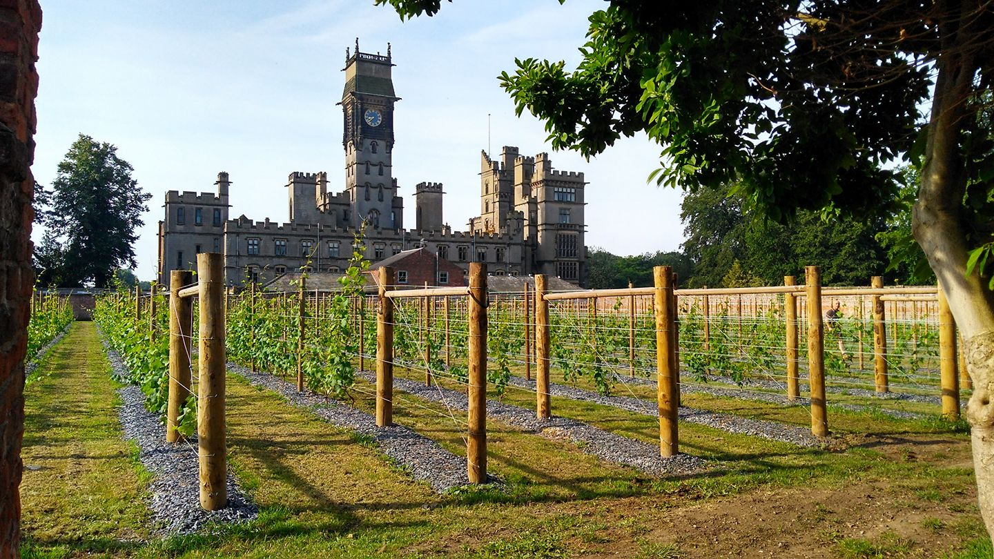 A View of the walled Vineyard, with Carlton Towers in the background